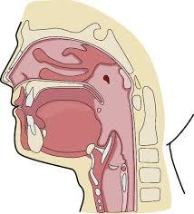 Burun boşluğu tümörleri belirtileri