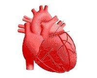Kalp büyümesi nedenleri