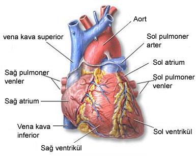 Yürek hastalarının yakınları ne yapmalı ? Nasıl davranmalı ?